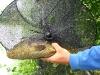Königsfischen 2008